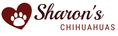 Sharon's Chihuahua's